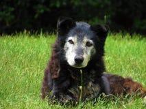 Dog Breed, Dog Breed Group, Fauna, Wildlife stock image