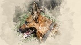 Dog breed German Shepherd. Home pet. Watercolor background Stock Photo