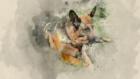 Dog breed German Shepherd. Home pet. Watercolor background Stock Photos