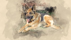 Dog breed German Shepherd. Home pet. Watercolor background Royalty Free Stock Image