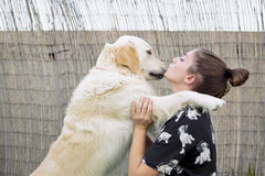 Dog breed Golden Retriever giving a hug to his owner. Royalty Free Stock Image