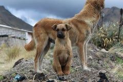 Dog Breed Group, Dog, Dog Breed, Street Dog Royalty Free Stock Photo