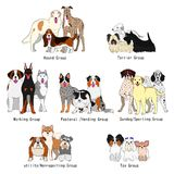 Dog breed groups. By the Kennel Club and American Kennel Club Royalty Free Stock Images