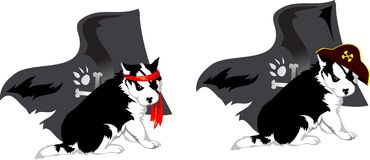 dog breed Husky as a pirate Stock Images