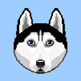 The dog of breed Husky. Portrait dog breed Husky in the style of pixel art. Vector illustration Stock Images