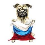 Dog breed pug holding a Russian flag. Isolated on white background. Politics. puppy. Dog breed pug holding a Russian flag. Isolated on white background. Politics stock illustration