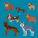 Dog breed set. Illustration of dog breed in flat style. Stock Photography