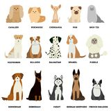 Dog breed set. Stock Photography