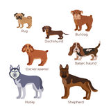Dog breed silhouette. Colorful illustration set for web sites, pet care shops or animal designs Royalty Free Stock Image