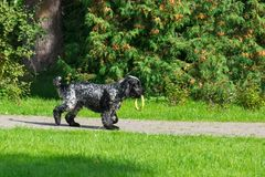 Dog in the park. Dog breed spaniel on the grass in the park Royalty Free Stock Photography