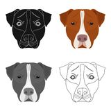 Dog breed, Stafford. Muzzle of Stafford icon in cartoon style vector symbol stock illustration Stock Images