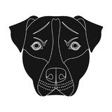 Dog breed, Stafford.Muzzle of Stafford single icon in black style vector symbol stock illustration web. Dog breed, Stafford.Muzzle of Stafford single icon in Royalty Free Stock Image