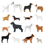 Dog breed vector illustration Stock Images