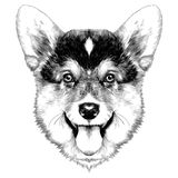 Dog breed Welsh Corgi sketch vector. Graphics monochrome Christmas bump royalty free illustration