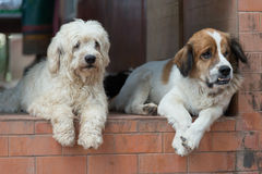 Dog breeder Thailand Stock Photos