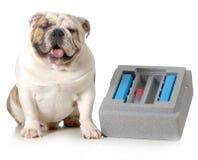 Dog breeding Royalty Free Stock Images