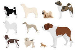 Dog breeds Stock Photo