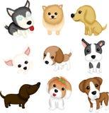 Dog breeds. A vector illustration of different dog breeds