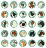 Dog breeds Avatars Vector set of 25 round frames. Geometric style Stock Images