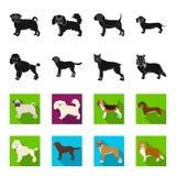 Dog breeds black,flet icons in set collection for design.Dog pet vector symbol stock web illustration. Dog breeds black,flet icons in set collection for design Stock Photography