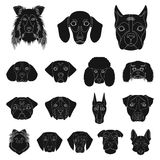 Dog breeds black icons in set collection for design.Muzzle of a dog vector symbol stock web illustration. Dog breeds black icons in set collection for design Stock Photos