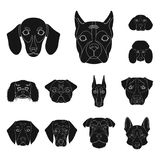 Dog breeds black icons in set collection for design.Muzzle of a dog vector symbol stock web illustration. Dog breeds black icons in set collection for design Stock Photo