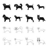 Dog breeds black,outline icons in set collection for design.Dog pet vector symbol stock web illustration. Dog breeds black,outline icons in set collection for Royalty Free Stock Photography