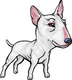 Dog Breeds: Bull Terrier. Vector, clip art, caricature illustration of Bull Terrier dog. Hand drawn artwork in loose, expressive style with NO gradients or Royalty Free Stock Photography