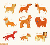 Dog breeds Stock Photography