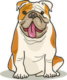 Dog breeds: bulldog Stock Photo