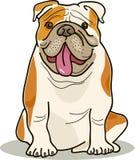 Dog breeds: bulldog Stock Photo