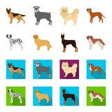 Dog breeds cartoon,flat icons in set collection for design.Dog pet vector symbol stock web illustration. Dog breeds cartoon,flat icons in set collection for Royalty Free Stock Photos