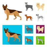Dog breeds cartoon,flat icons in set collection for design.Dog pet vector symbol stock web illustration. Dog breeds cartoon,flat icons in set collection for Royalty Free Stock Images