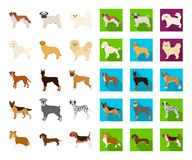 Dog breeds cartoon,flat icons in set collection for design.Dog pet vector symbol stock web illustration. vector illustration
