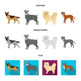 Dog breeds cartoon,flat,monochrome icons in set collection for design.Dog pet vector symbol stock web illustration. Dog breeds cartoon,flat,monochrome icons in Stock Photography