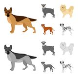 Dog breeds cartoon,monochrome icons in set collection for design.Dog pet vector symbol stock web illustration. Dog breeds cartoon,monochrome icons in set Stock Image