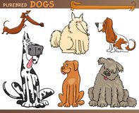 Dog breeds cartoon set Royalty Free Stock Photos