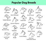 Dog Breeds Collection Stock Photography