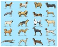 Free Dog Breeds Engraved, Hand Drawn Vector Illustration In Woodcut Scratchboard Style, Vintage Drawing Species. Pug And Royalty Free Stock Image - 94925836