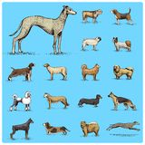 Dog breeds engraved, hand drawn vector illustration in woodcut scratchboard   Royalty Free Stock Photos