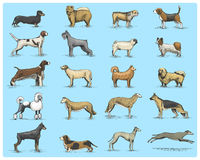 Dog breeds engraved, hand drawn vector illustration in woodcut scratchboard style, vintage drawing species. pug and Stock Photos
