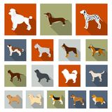 Dog breeds flat icons in set collection for design.Dog pet vector symbol stock web illustration. Dog breeds flat icons in set collection for design.Dog pet Royalty Free Stock Images