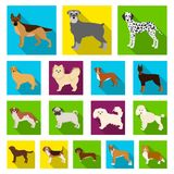 Dog breeds flat icons in set collection for design.Dog pet vector symbol stock web illustration. Dog breeds flat icons in set collection for design.Dog pet Royalty Free Stock Image