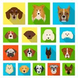 Dog breeds flat icons in set collection for design.Muzzle of a dog vector symbol stock web illustration. Dog breeds flat icons in set collection for design Royalty Free Stock Photos