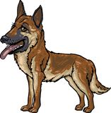 Dog Breeds: German Shepherd Stock Photo