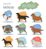 Dog breeds. Hunting dog set icon. Flat style Royalty Free Stock Photo