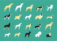 Dog breeds illustration Stock Image