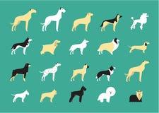 Dog breeds illustration Stock Image