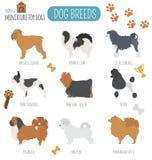 Dog breeds. Miniature toy dog set icon. Flat style Stock Photos