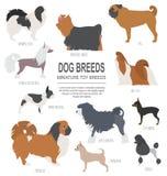 Dog breeds. Miniature toy dog set icon. Flat style Stock Image